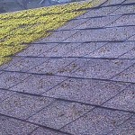 Roof-Cleaning-Before-After