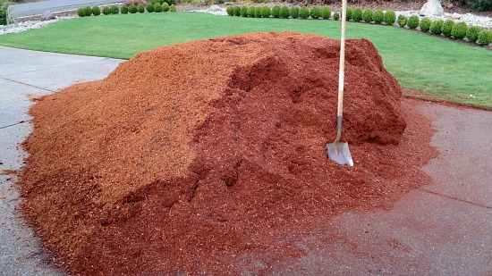 How to keep cats out of bark mulch